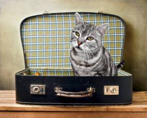 kot w podrózy