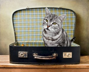 kot wyjazd