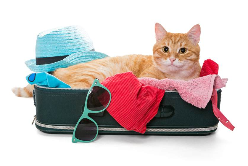 kot w walizce - najlepsza karma dla kotów