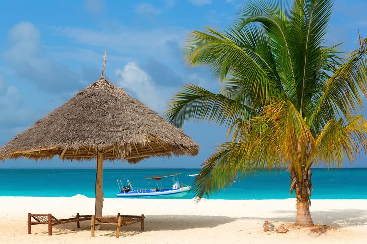 plaża zanzibar palma