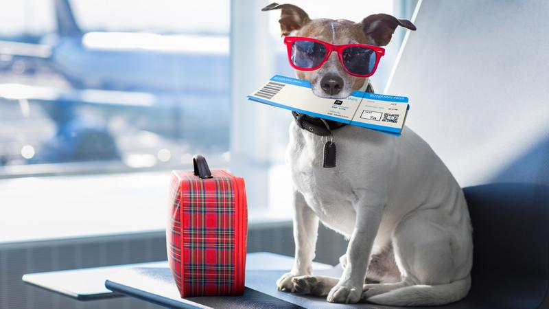 pies z walizka